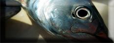 Pesci-Impariamo a conoscerli