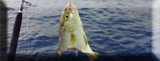Domande sulla Pesca con il vivo